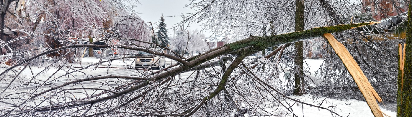 Icestorm damage